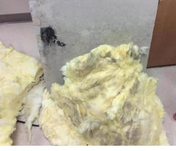 Mold Remediation Mold in Insulation