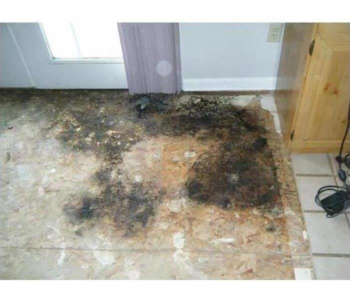 Mold Remediation When Mold Hits Your Home